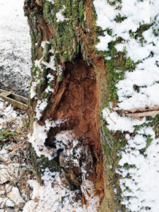 Massiver Stammfussschaden - Baumpflege Stock