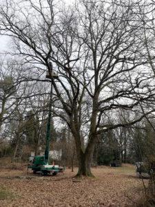 Kronenpflegeschnitt-Baumpflege Stock