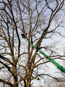 Totholzentfernung Baumpflege-Stock