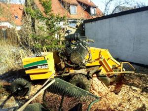 Wurzelstockentfernung Wurzelstock fräasen Baumpflege Stock
